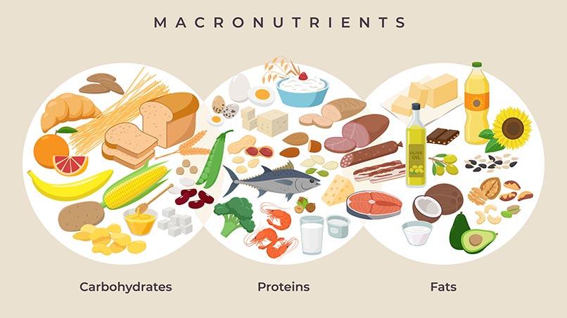 Ilustração de macronutrientes